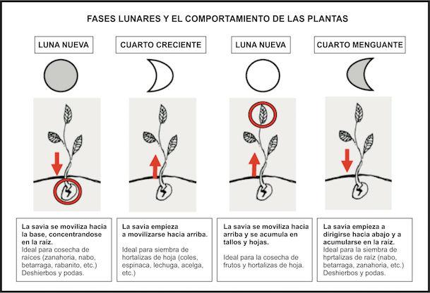 Trabajos a realizar - Huertos Ecológicos Zaragoza
